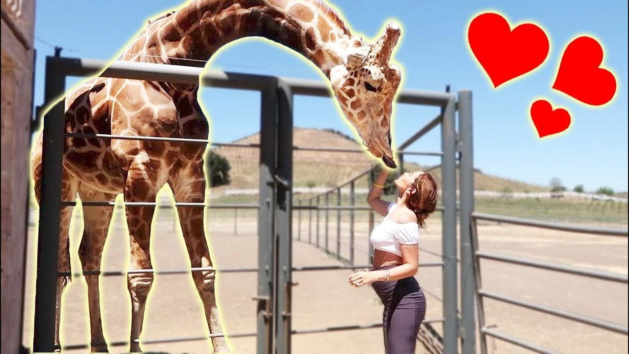 surprising-catherine-with-a-giant-giraffe-they-fell-in-love