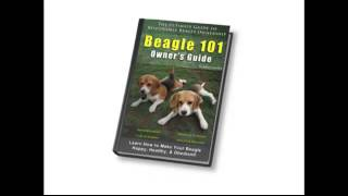 Beagle Owners 101 Review  Http://getdogtrainingtips.com/video27