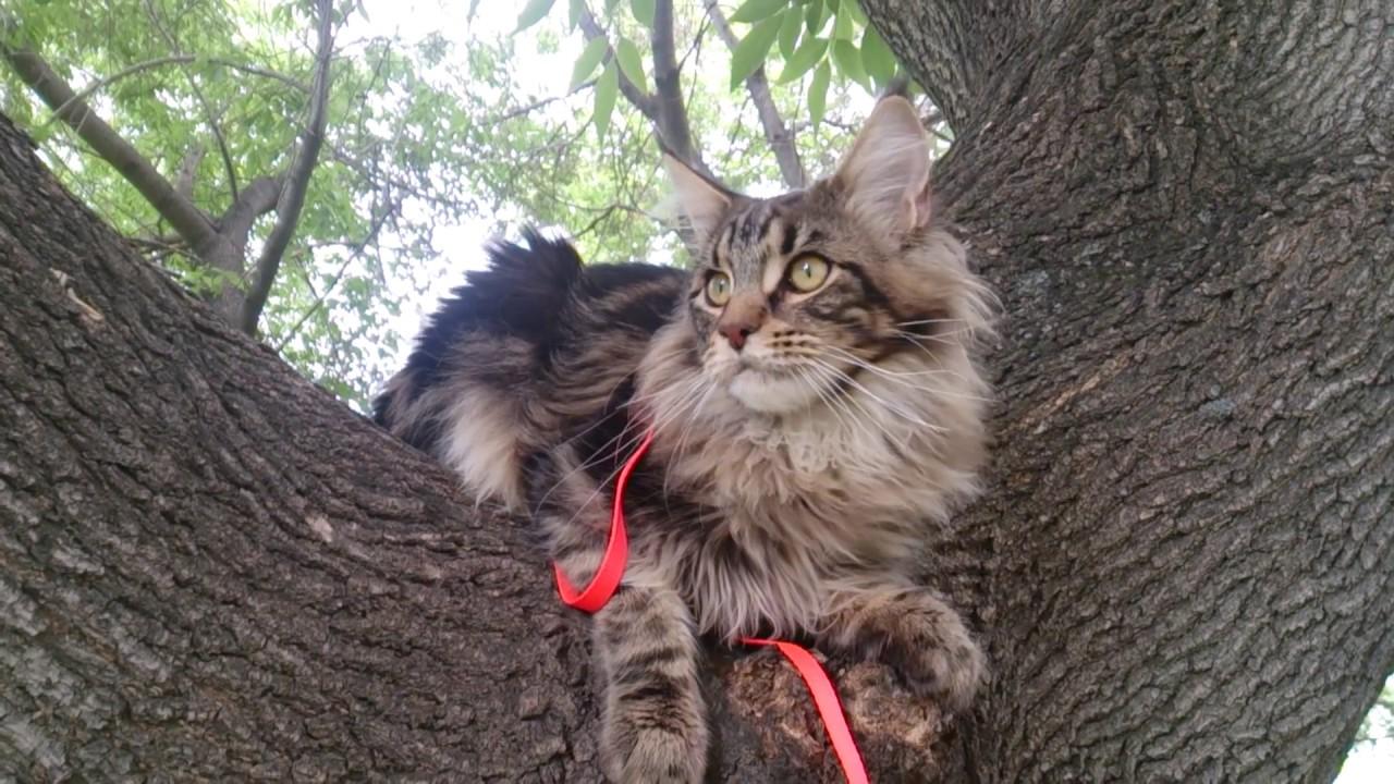 В нашей семье живут котята. Они братья, папа у них — артур. Гарфилд — красный мраморный братишка, хоссе — черный мраморный братишка. Мы их очень любим, заботимся. Они наши самые добрые и верные друзья. Наши котята очень ласковые, чуткие, игривые. Они понимают каждое наше слово.