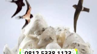 budidaya, pencucian,pasar dunia, harga komoditi, Sarang Burung walet