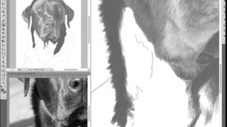 Speed Painting: Dylan, Black Labrador Pencil Portrait
