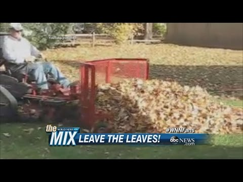 Science Says Don't Rake Your Leaves | ABC News