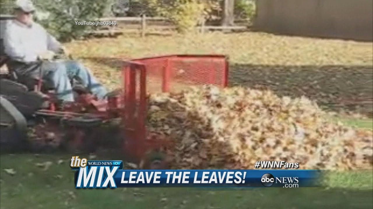 Backyard Science Abc Part - 27: Science Says Donu0027t Rake Your Leaves | ABC News
