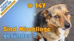 TGH 147 : Sind Mischlinge gesünder als Rassehunde? - Hundeschule Stadtfelle