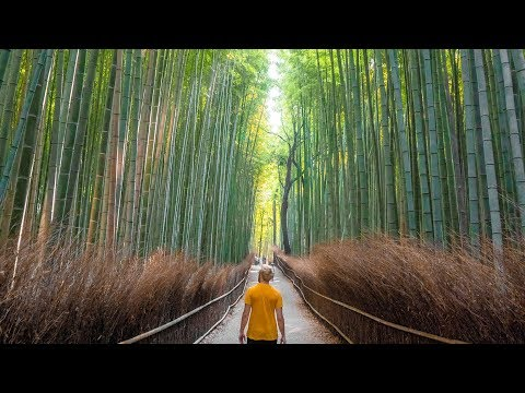 The Bamboo Forest in Kyoto Japan - Vlog 157