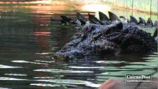 Cassius: World's Largest Crocodile in Captivity, Green Island, Australia
