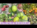 Eight notable Fruit Plants that you can grow in pots/आठ विशिष्ट फलदार पौधे।