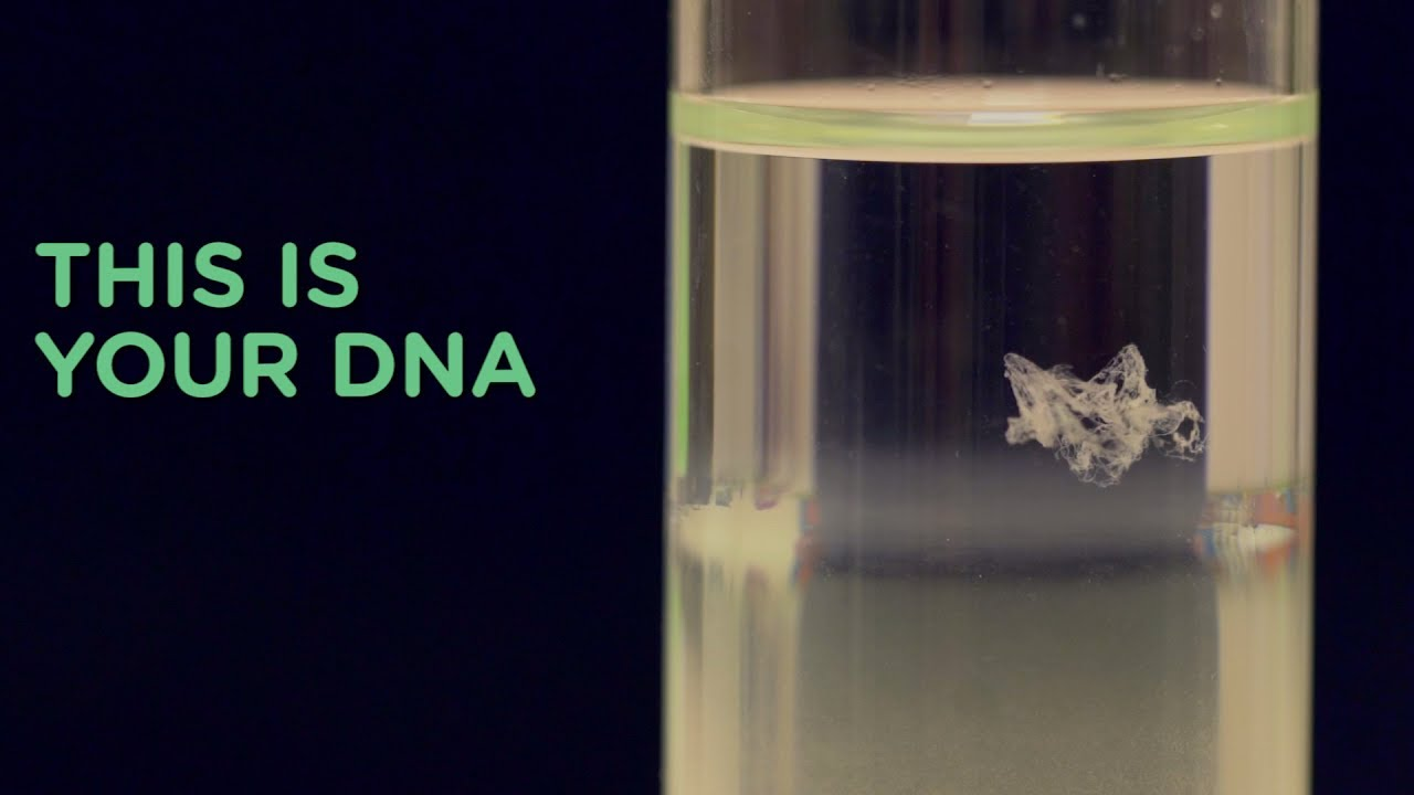 Human DNA Extraction | DIY Crime Scene