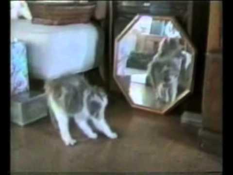 Эти забавные кошки