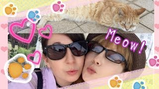 HOW TO GET TO CAT ISLAND from TOKYO - A CAT DAY at Jogashima