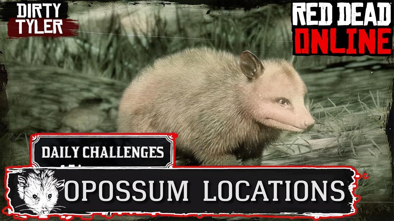 Opossum RDR2 Locations Red Dead Online Virginia Opossum