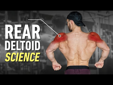 How To Build Boulder Rear Delts: Optimal Training Explained