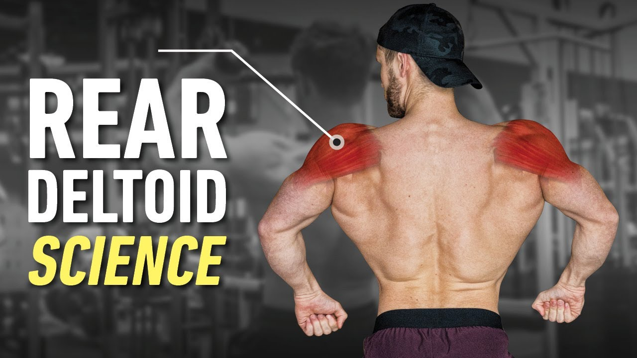 Download How To Build Boulder Rear Delts: Optimal Training Explained