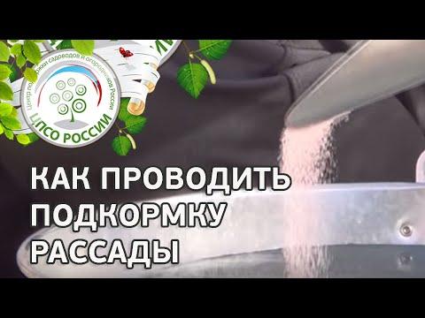 видео: Чем подкормить рассаду. Подкормка рассады томата, капусты, растений редиса.