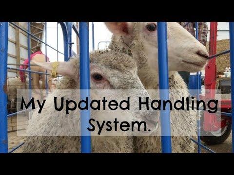 Updated Sheep Handling System  |   Vlog 45