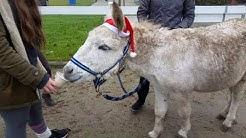 Neues vom Hankenhof - Updates, Olaf zieht ein und Weihnachtsgrüße