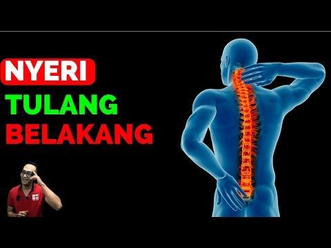 Tentang fungsi tulang belakang,komposisi, dan spinal refleks.