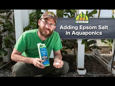 Adding Epsom Salt to Aquaponics Systems