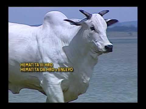 LOTE EXTRA - HEMATITA DA HRO   HRO 699