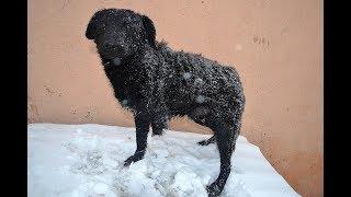 Rescued Three-Legged Abandoned Dog