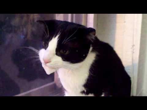 Foaming Cat!!!