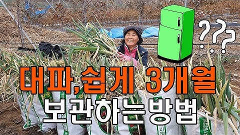가을 대파, 3개월 봄까지 저장하는방법 파 보관법 - Welsh onion