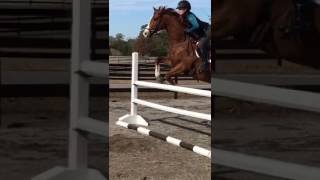 Minion Show Jump School Dec. 2016