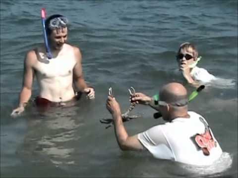 Channel Clinging Crab   Sombrero Beach, Florida Keys