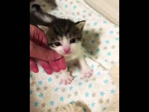 Adorable newborn kittens meowing-Cats of Instagram