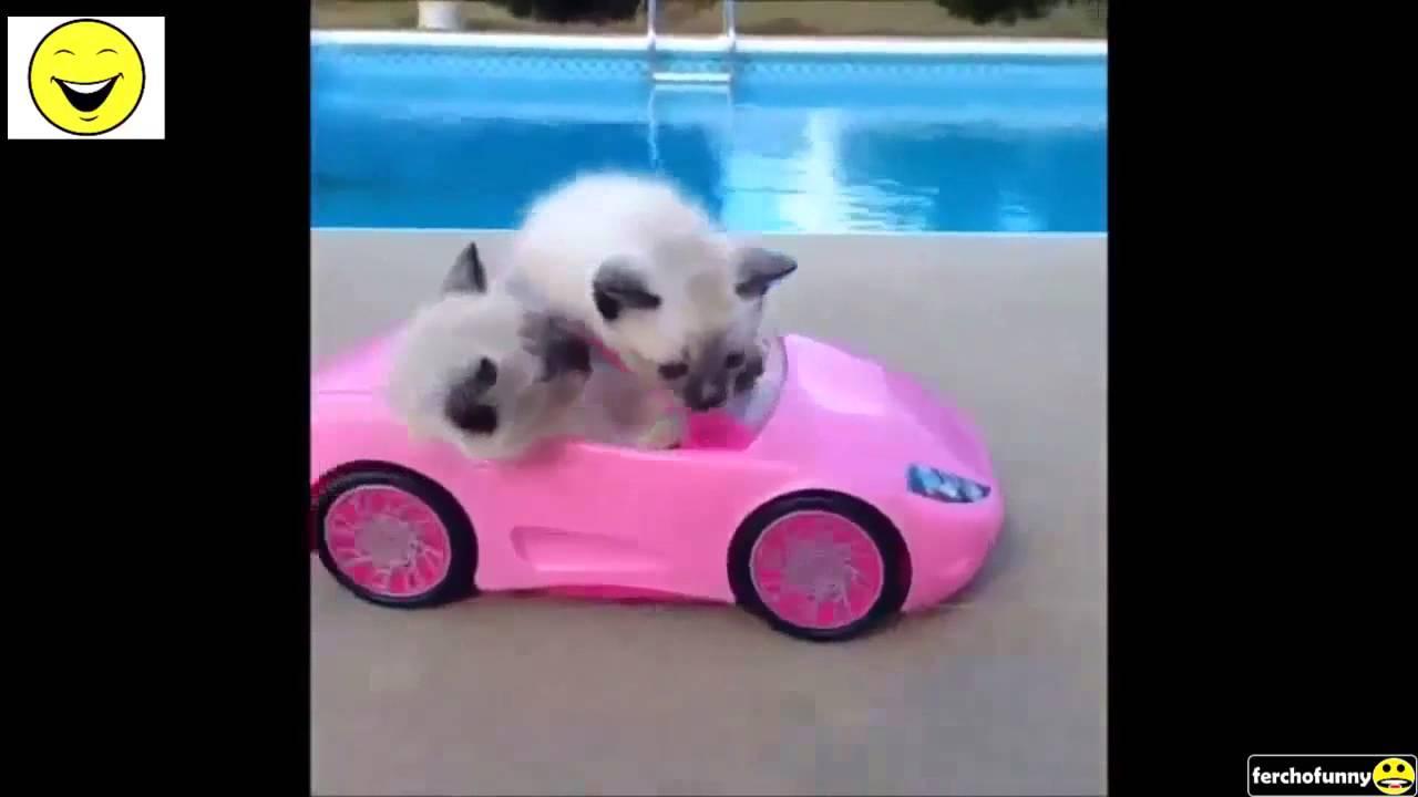 Los Mejores Vines de Gatos del 2015! Recopilación Gatos Graciosos , YouTube