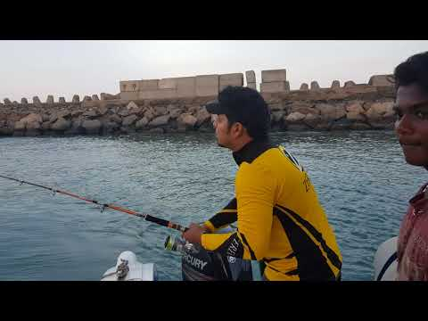 Barracuda Fishing In Chennai With Poseidon Sport Fishing