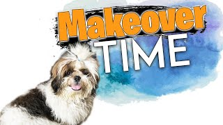 It's Makeover Time |Happy| Booster Puppy New Cute Look| My Pet Dog| Hairstyle | vlog | Sushma Kiron