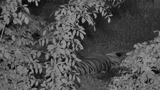 Tiger Lake Cam 09-21-2018 03:16:39 - 04:16:40 thumbnail