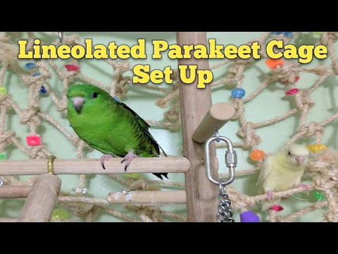 lineolated-parakeet-cage-set-up