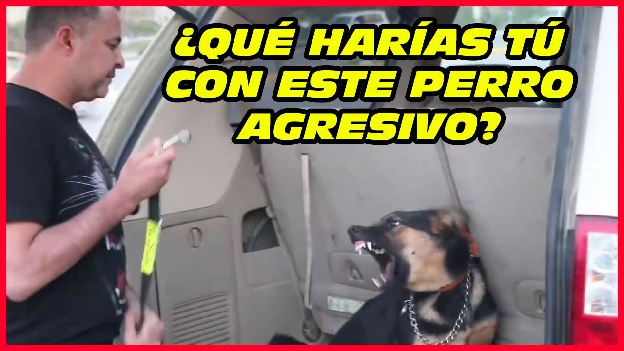 ⚠️Toma estas medidas de seguridad ⛑️con perros agresivos