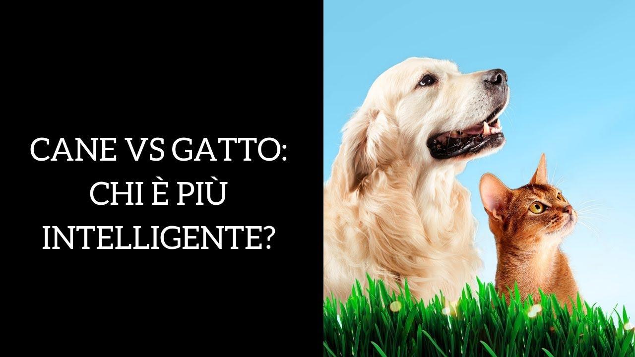 Cane O Gatto Chi è Più Intelligente Youtube