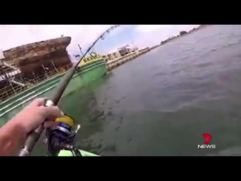 Monster Kingfish Pulls Guy Around In A Kayak (Port River)