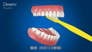 貝氏刷牙法|刷牙刷對了嗎?快樂牙齒 2017