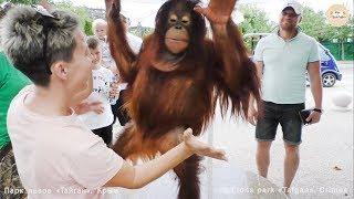 Дана - звезда Тайгана на прогулке. Орангутан. Dana is the star of Taigan on a walk. Orangutan Taigan