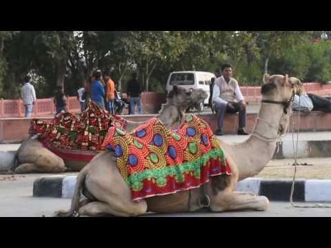Travel Diaries: Jaipur