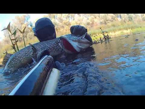 подводная охота на белого амура видео 2016 новинки