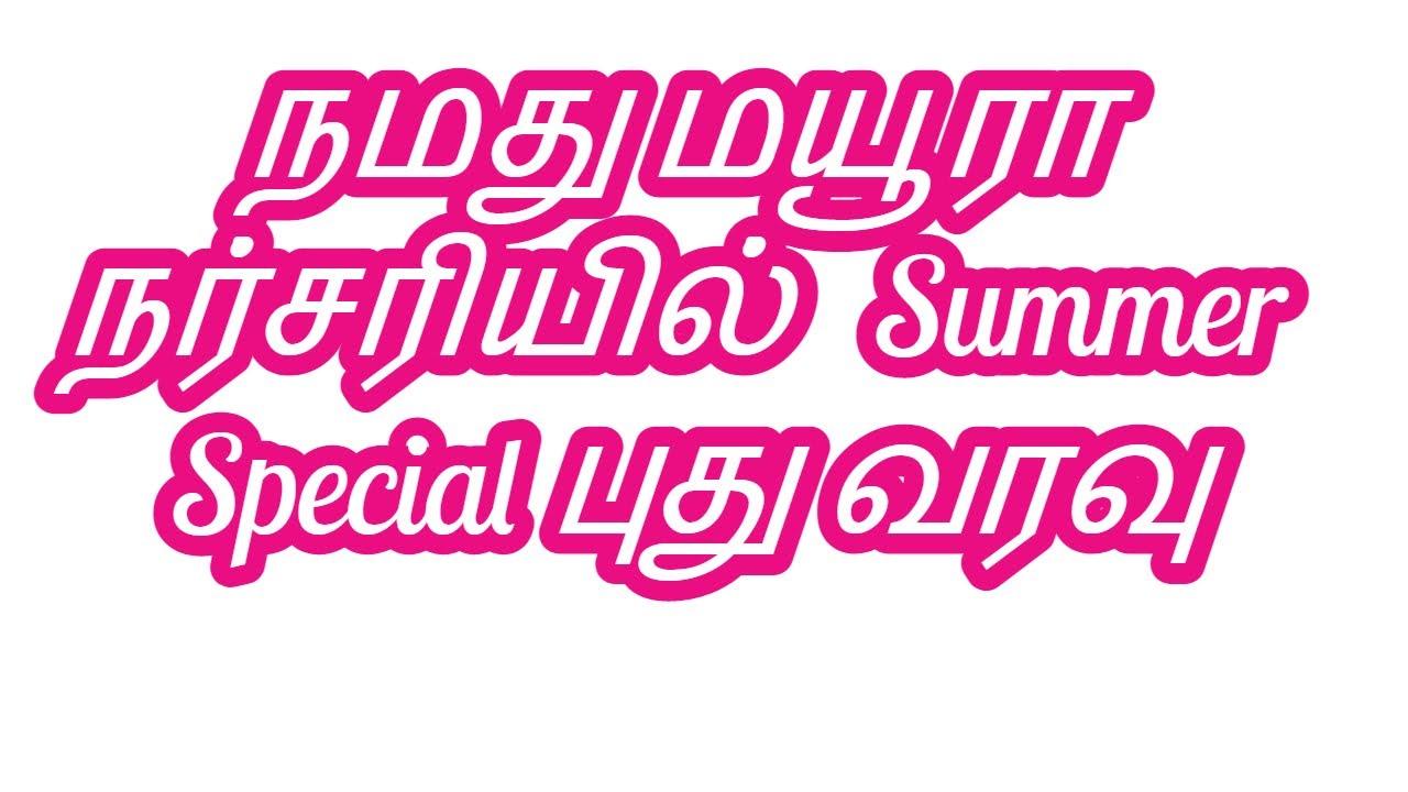நமது மயூரா நர்சரியில் Summer Special புது வரவு
