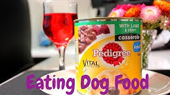 Eating Dog Food - Pedigree Lamb and Casserole Dog Food