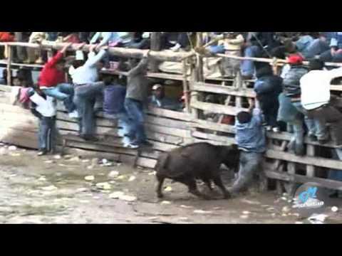 toros de mi pueblo vol 9 (7) (HD)