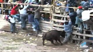 Repeat youtube video toros de mi pueblo vol 9 (7) (HD)