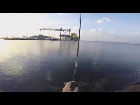 Shore Jigging Mulloway Botany Bay