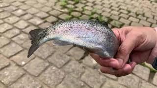 เมียไทยสามีญี่ปุ่นไปออนเซ็นแต่เป็นตกปลา ใครตกได้แยอะ [2020Ep113]