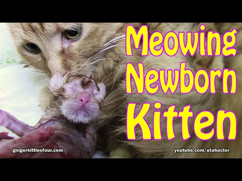 Kitten Born No Amniotic Sac, New Mother Unsure What To Do