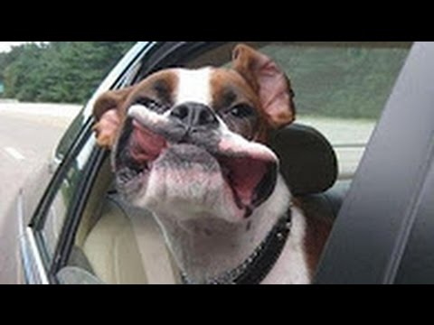 Funny Animals – Funny Dog Videos – Funny Dogs Flapping Lips In The Wind Compilation 2016