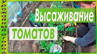 ВЫСАДКА РАССАДЫ ТОМАТОВ В ГРУНТ!(ДАТА СЪЕМКИ 26.04.2016 г.МОСКОВСКАЯ ОБЛАСТЬ)) В этом видео я покажу высадку рассады томатов в грунт., 2016-04-27T05:13:07.000Z)